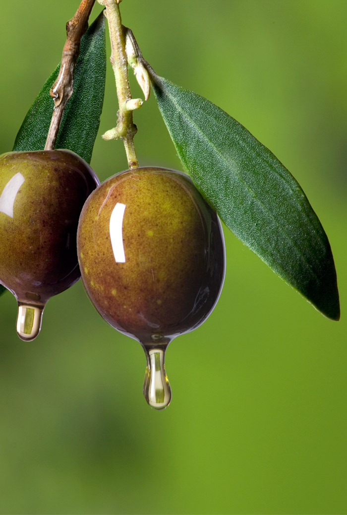 aceitunas-arbol