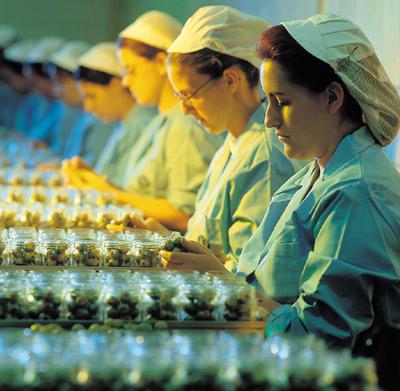 envasado-mujeres--aceitunas